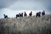 Horses run free in the Cordoba countryside, Argentina.