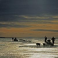INTERNATIONAL ARCTIC PROJECT. Dog teams mush across frozen Great Slave Lake, Northwest Territories, Canada.