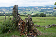 Linley Beeches in the area west of the Long Mynd on 24th July 2020 near Wentnor, United Kingdom. Linley Beeches is a line of Beech tree on top of Linley Hill.  The avenue was planted in about 1740 by Napoleonic soldiers for Robert More, owner of Linley Hall and a well-known botanist of the time. He is credited with introducing the Larch tree to England. The Long Mynd is a heath and moorland plateau that forms part of the Shropshire Hills in Shropshire, England. The high ground, which is designated as an Area of Outstanding Natural Beauty, lies between the Stiperstones range to the west and the Stretton Hills and Wenlock Edge to the east. Much of it is owned and managed by the National Trust.