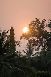 Sunset and palm trees, Laos