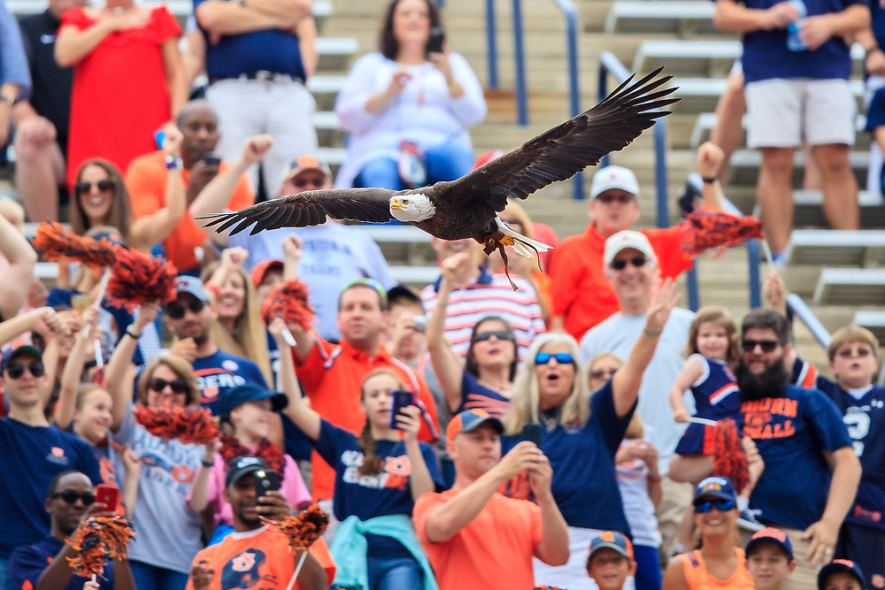 The crowd looks on as Spirit, a bald eagle flies prior to an NCAA football game between the Mississippi Rebels and the Auburn Tigers, Saturday, October 7, 2017, in Auburn, AL. Auburn won 44-23. (Paul Abell via Abell Images for Chick-fil-A Peach Bowl)