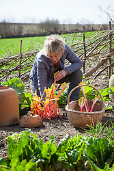 Carol Klein harvesting rhubarb