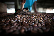 Cocoa beans are brewing in the technical area of the Claudio Corallo's plantation on the island of Sao Tome, Sao Tome and Principe, (STP) a former Portuguese colony in the Gulf of Guinea, West Africa.