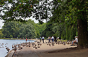 Ducks and geese, Hyde Park by The Serpentine, London. Wild birds may risk Avian flu bird flu virus