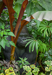 Tropical foliage border at John Massey's garden with gorilla sculpture. Includes Ensete maurelli (Ethiopian black banana), Begonia luxurians (Palm leaf begonia) and variegated pelargonium