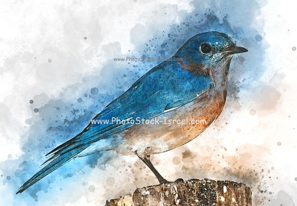 Digitally enhanced image of a Eastern bluebird (Sialia sialis) perched on a rock