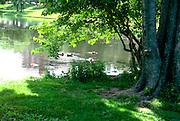 Loring Park duck community.  Minneapolis Minnesota USA