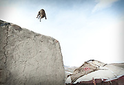 A cat jumping from a mud house. At the Kyrgyz settlement of Ak Chyktash (Mullah Abdul Kassim's camp, aka Mullah Bachik)...Trekking through the high altitude plateau of the Little Pamir mountains, where the Afghan Kyrgyz community live all year, on the borders of China, Tajikistan and Pakistan.
