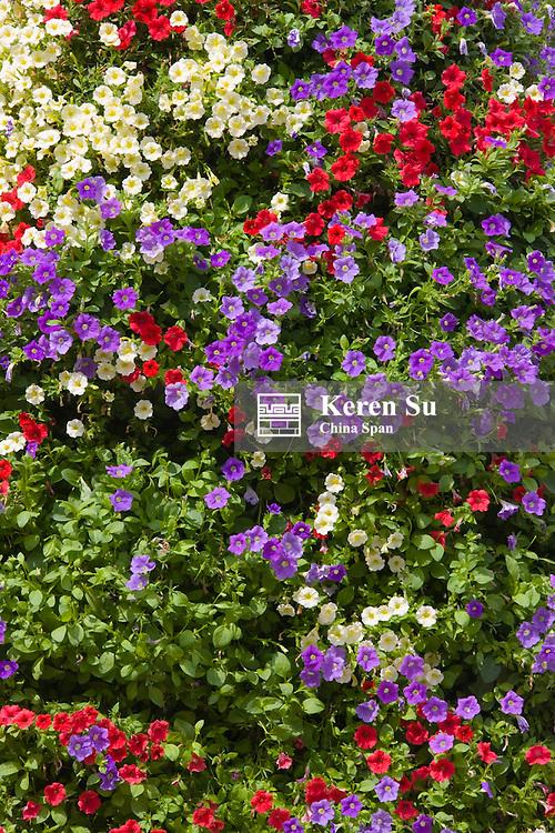 Flowers, Koblenz, Germany