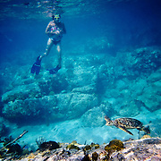A woman swimming with a turtle on a reef off St John in the Caribbean