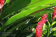08: PACIFIC GOLFO DULCE FLOWERS