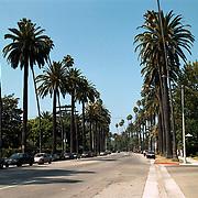 Reis Amerika, straat in Los Angeles Beverly Hills met palmbomen