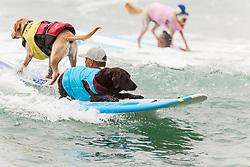 July 29, 2017 - Imperial Beach, CA, US - Surfdog returns to Imperial Beach for the twelfth  year...Koa surfing. (Credit Image: © Daren Fentiman via ZUMA Wire)