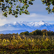 Canigou in autumn and vineyard