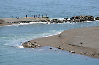 Sightseers view seals and their pups basking on a sandbank near Jenner, Somoma County, California, USA, at the estuary of the Russian River where it enters the Pacific Ocean. 201304292053 <br /> <br /> Copyright Image from Victor Patterson, 54 Dorchester Park, Belfast, UK, BT9 6RJ<br /> <br /> Tel: +44 28 9066 1296<br /> Mob: +44 7802 353836<br /> Voicemail +44 20 8816 7153<br /> Skype: victorpattersonbelfast<br /> Email: victorpatterson@me.com<br /> Email: victorpatterson@ireland.com (back-up)<br /> <br /> IMPORTANT: If you wish to use this image or any other of my images please go to www.victorpatterson.com and click on the Terms & Conditions. Then contact me by email or phone with the reference number(s) of the image(s) concerned.