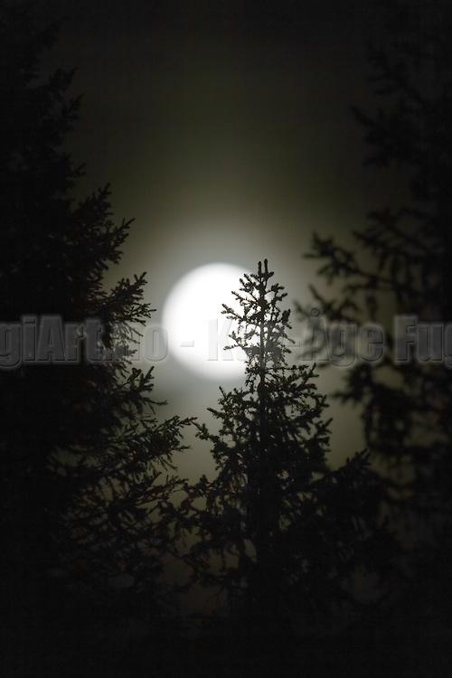 Full moon behind trees in the wood   Fullmåne bak trær i skogen.