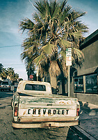Rusting Chevy pick up truck next to palm tree.