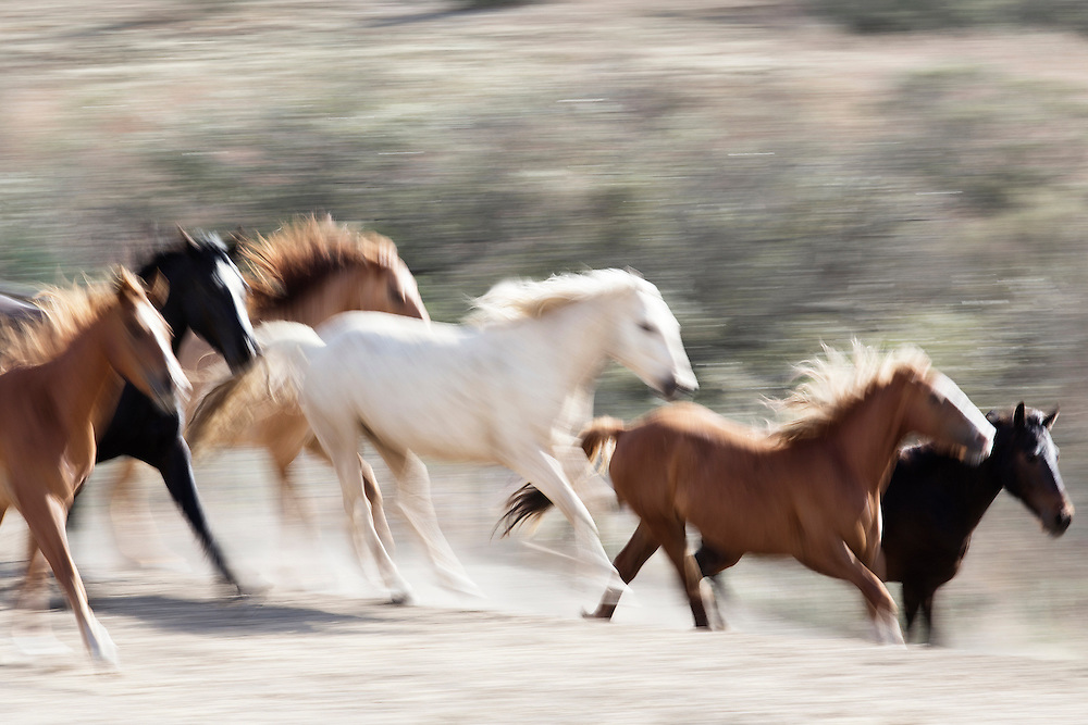MAKA MEANS EARTH IN THE SIOUX TRIBE<br /> <br /> WHEN I SET OUT TO PHOTOGRAPH THE WILD MUSTANGS FOR MY SECOND SERIES I HAD ONLY TWO GOALS. FIRST, TO BE FULLY PRESENT AND IN THE MOMENT TO MYSELF, MY ENVIRONMENT AND THE ANIMALS I WAS PHOTOGRAPHING. AND SECONDLY, TO GET GREAT BLURR. TO NAIL A GOOD BLUR OF RUNNING WILD ANIMALS IN AN UNCONTROLLABLE AND CONSTANTLY CHANGING ENVIRONMENT IS PRETTY CHALLENGING TO SAY THE LEAST.  I WAS THRILLED WITH THESE IMAGES. MY GOAL WAS TO CAPTURE MOVEMENT, COMPOSITION, AND SHAPE SO THAT THE WILD MUSTANGS TOOK ON MORE OF A 'FINE ART' FEEL - MORE CONCEPTUAL. THIS SHOT IS STRAIGHT FROM THE CAMERA, THERE IS NO POST RETOUCHING TO CREATE THESE LINES. <br /> <br /> I NAMED THREE OF MY BLURR IMAGES EARTH, WIND AND FIRE.  I LOVE THE SPEED, MOVEMENT, AND TEXTURES IN THIS IMAGE. I LOVE THE POWER YOU CAN FEEL IN THIS ARTIST IMAGE.