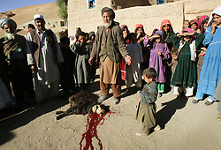 Father of the bride, Abdul, 60, slits the throat of a lamb to celebrate the engagement of Roshan, 8, and Said, 55, Afghanistan, Sept. 10, 2005. Abdul said he is unhappy giving his daughter away at such a young age, but has no choice due to severe poverty. It is hard to say exactly how many young marriages take place, but according to the women's ministry and women's NGOs, approximately 57 percent of Afghan girls get married before the legal age of 16. In addition, once the girl's father has agreed to the engagement, she is pulled out of school immediately. Early pregnancies also result in an increase in complications during child birth.