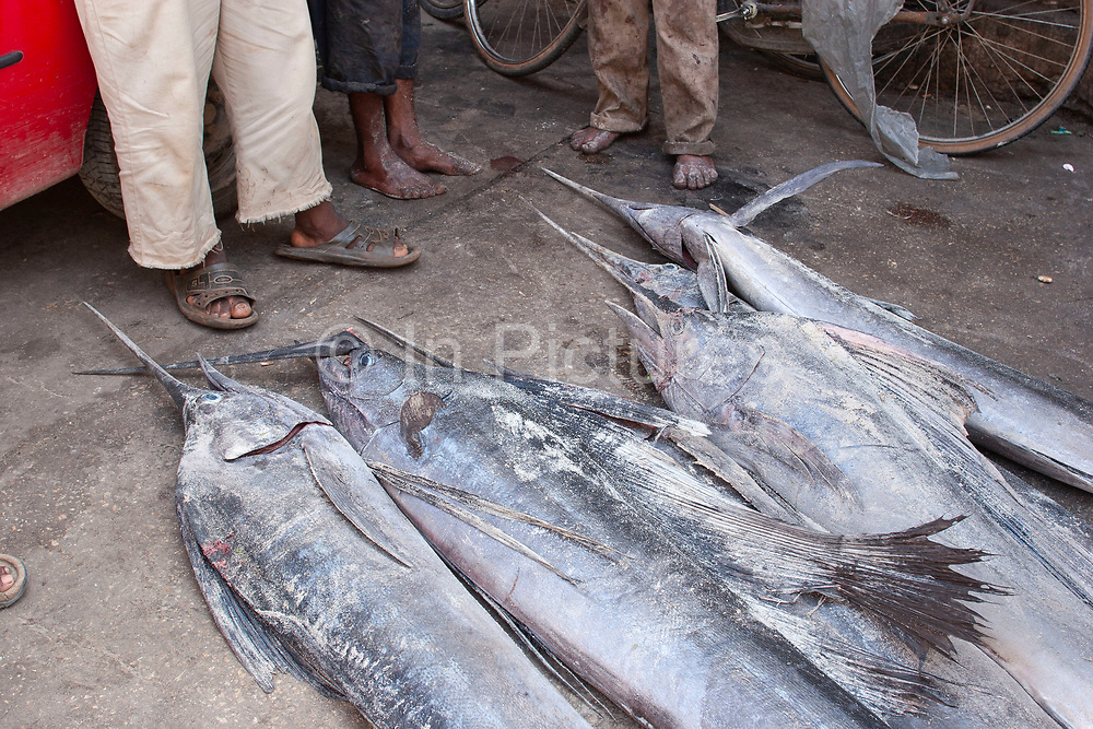 Sail fish is laid on the dusty floor of the fish section at the main market in Stone Town on 6th December 2008 in Zanzibar, Tanzania. This endangered fish is continually fished irrespective of the size of the catch despite warnings that this fishing is not sustainable. The searing heat and humidity and the exposed meat makes for an incredible atmosphere as market traders and customers alike barter for the produce. Zanzibar is a small island just off the coast of the Tanzanian mainland in the Indian Ocean. In part due to its name, Zanzibar is a travel destination of mystical reputation, known for its incredible sealife on its many reefs, the powder white coral sand beaches and the traditional cultivation of spices.