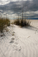Sand Dunes Florida Coast