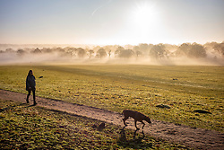 © Licensed to London News Pictures. 30/12/2019. London, UK. Dog walkers enjoy a wonderful misty morning in Richmond Park, London as forecasters predict unseasonably warm weather and possibly the the warmest New Year's Eve for over a 170 years. Photo credit: Alex Lentati/LNP