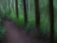 a blurry path through the forest surreal via rapid camera motion blur
