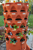 Garden Tower 3 (commercial transplanted seedlings) . Image taken with a Leica CL camera and 23 mm lens