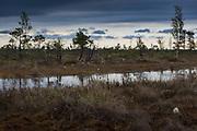 Cloudy morning with occasional short showers in raised bog with lots of bog pools, Kemeri National Park (Ķemeru Nacionālais parks), Latvia Ⓒ Davis Ulands   davisulands.com