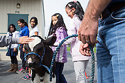 Students pet one-month-old calf Rocky during the Mobile Dairy Classroom visit at Zanker Elementary School in Milpitas, California, on March 14, 2016. (Stan Olszewski/SOSKIphoto)