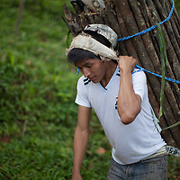 This Q'eqchi man carries a load of firewood he has cut and bundled from Concepción Actelá to Santa Catalina de la Tinta in Alta Verapaz, Guatemala. It's two hours walking very fast. With luck he'll get 20 Quetzales, that's $2.60 or £2.00. Then he'll walk home. He carries this very heavy load with a headband called a 'mecapal'.