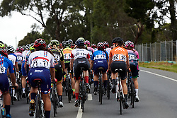 All together in the early stages of the 2020 Cadel Evans Great Ocean Road Race - Deakin University Women's Race, a 121 km road race in Geelong, Australia on February 1, 2020. Photo by Sean Robinson/velofocus.com