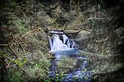 Twin Falls, Silver Falls State Park, Oregon