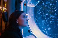 moon jellyfish at zsl London zoo photos by Brian Jordan