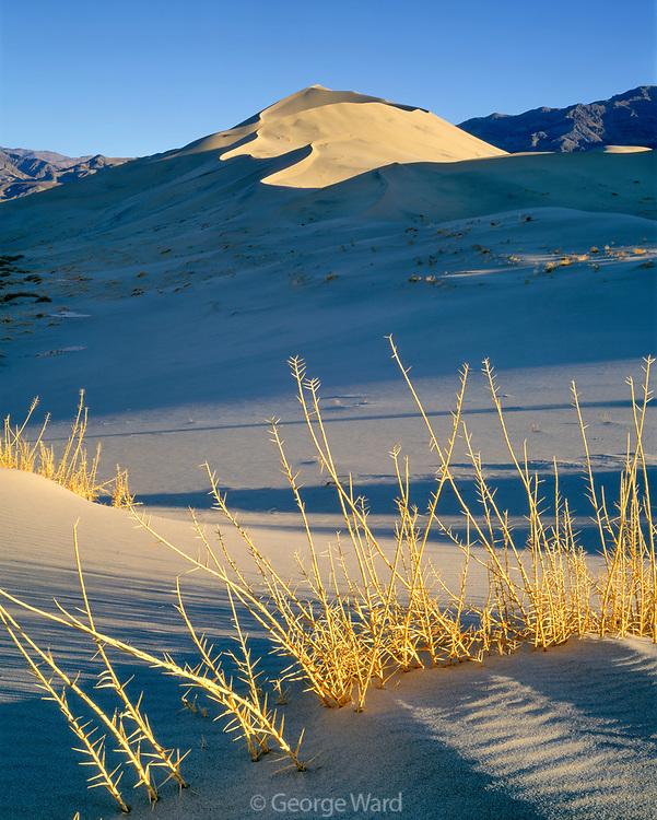 Eureka Dune Grass [endangered species] and Eureka Sand Dunes, Death Valley National Park, California