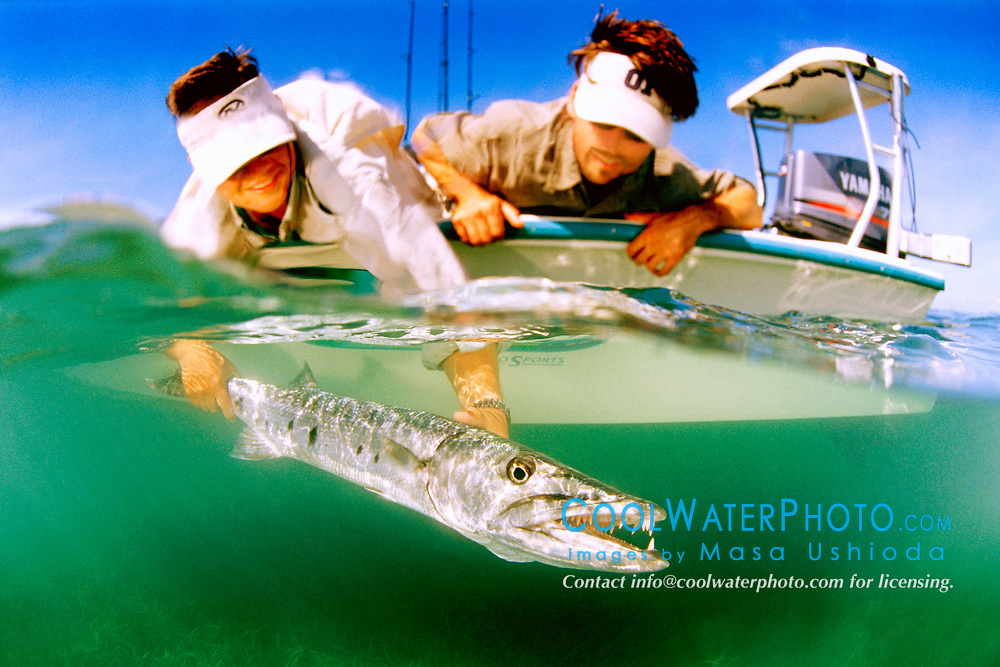 great barracuda, Sphyraena barracuda, Stiltsville, Biscayne National Park, Miami, Florida, USA, Atlantic Ocean