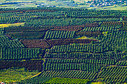 Aerial photography. Elevated view of citrus tree orchards in Jezreel Valley, Israel