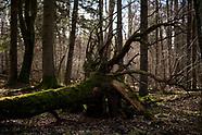 Puszcza Białowieska pejzaże leśne
