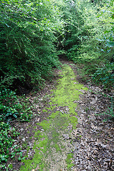 Lush vegetation along Devon Anderson Trail on Piedmont Ridge, Great Trinity Forest, Dallas, Texas, USA