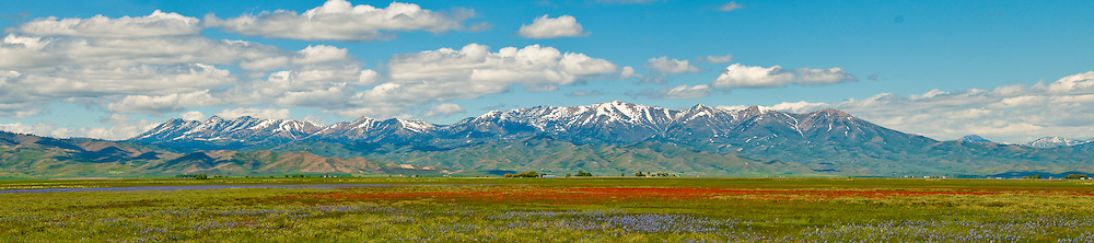 Camas Prairie Centenial Marsh with the snow capped Soldier Mountains during spring near Fairfield, Idaho.