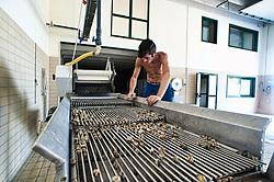 Cagnano Varano, centro di depurazione delle vongole