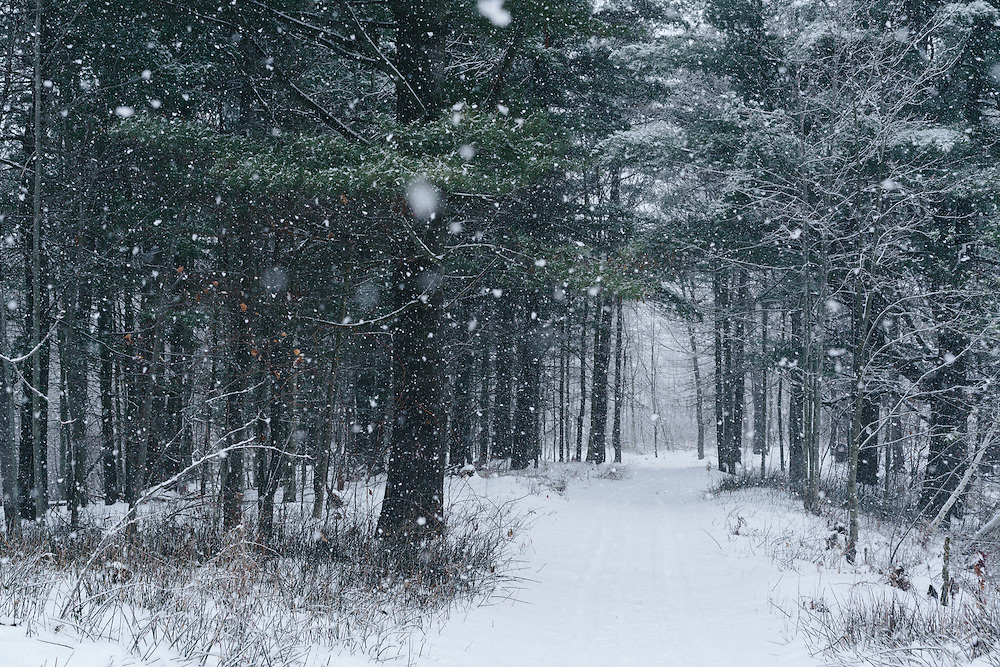 http://Duncan.co/snowing-in-the-forest