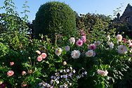 "Dahlia 'Cafe au Lait"" in a border at Chenies Manor House, Chenies, Rickmansworth, Buckinghamshire, UK"