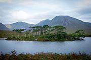 Pine Island, Connemara, Galway, Ireland