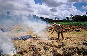 28 JULY 2002 - COLISEO, MATANZAS, CUBA: A farmer burns dead cornstalks out of his cornfield near Coliseo, province of Matanzas, Cuba, July 28, 2002. The farmer said he is one of a growing number of private farmers in Cuba, who pays and grows his own crops and then sells most of the crop to the public at prices he sets rather than to the state which pays a much lower amount. .PHOTO BY JACK KURTZ