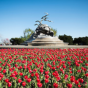 Washington, DC - The Navy-Merchant Marine Memorial, on the banks of the Potomac and not far from the Pentagon, is surrounded by red tulips that flower in the spring. It sits next on Columbia Island along the George Washington Memorial Parkway.