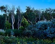 Bos in de duinen van het Westduinpark, Den Haag - Forest in the dunes of Westduinpark. The Hague, Netherlands