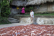 """Luciano Sho (right), 52, cacao grower from San Antonio, rakes drying cacao beans on his patio while his wife Eugenia Sho, 48, carries a basket with additional beans. Mr. Sho switched from rice farming in 2004 and joined the TCGA in 2005. He now has 17,000 cacao trees and is one of the organization's most successful members. """"Thanks to the TCGA and Fair Trade for providing us great benefits. I have 13 children and many have been granted Fair Trade scholarships. I am very proud to belong to the TCGA."""" Toledo Cacao Growers' Association (TCGA), San Antonio, Toledo, Belize. January 28, 2013."""