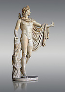 2nd century AD Roman statue of Apollo known as the Belvederre Apollo. The Apollo statue originally had a bow in its left hand and Apollo is depiceted having just fired an arrow.  Probably a Roman copy of a Hellenistic statue from around 330-320 BC by Leochares. Inv 1015, Vatican Museum Rome, Italy,  grey  background ..<br /> <br /> If you prefer to buy from our ALAMY STOCK LIBRARY page at https://www.alamy.com/portfolio/paul-williams-funkystock/greco-roman-sculptures.html . Type -    Vatican    - into LOWER SEARCH WITHIN GALLERY box - Refine search by adding a subject, place, background colour, museum etc.<br /> <br /> Visit our CLASSICAL WORLD HISTORIC SITES PHOTO COLLECTIONS for more photos to download or buy as wall art prints https://funkystock.photoshelter.com/gallery-collection/The-Romans-Art-Artefacts-Antiquities-Historic-Sites-Pictures-Images/C0000r2uLJJo9_s0c
