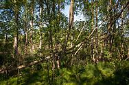 the Worringer Bruch, an 8000 year old silted up meander of the Rhine. At 37.5 meters above sea level, the floodplain is the lowest point in Cologne, Germany.<br /> <br /> der Worringer Bruch, ein 8000 Jahre alter verlandeter Maeanderbogen des Rheins. Die Auenlandschaft ist mit 37,5 m über dem Meeresspiegel der tiefste Punkt in Koeln, Germany.